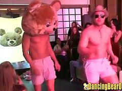dancing bear banquette